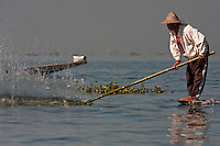 Myanmar, Burma.  Fisherman Slapping the Water with a Bamboo Pole to Stun Fish.  Inle Lake, Shan State.