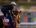 October 28, 2019 : Breeders' Cup Sprint entrant Mitole, trained by Steven M. Asmussen, exercises in preparation for the Breeders' Cup World Championships at Santa Anita Park in Arcadia, California on October 28, 2019. Carolyn Simancik/Eclipse Sportswire/Breeders' Cup/CSM