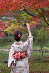 Japan, West Honshu, Kansai, Kyoto, district Higashiyama-ku: Young Japanese girl in Kimono photographing autumn maple leaves near Kodai-ji Temple | Japan, West-Honshu, Kansai, Kyoto - Stadtteil Higashiyama-ku: junge japanische Frau im traditionellen Kimono fotografiert einen Ahorn im farbenpraechtigen Herbstkleid beim Kodai-ji Tempel