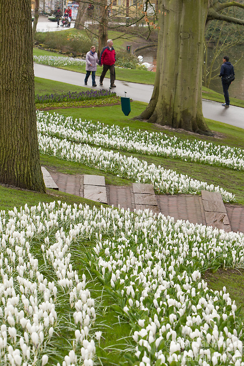 Walking through the Keukenhof in the Netherlands.