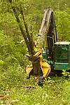 Feller buncher tree harvesting