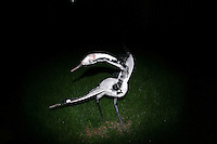 CHINA. Beijing. A model of a bird in a park . 2008