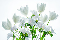Tulips asnd azaleas boquet.