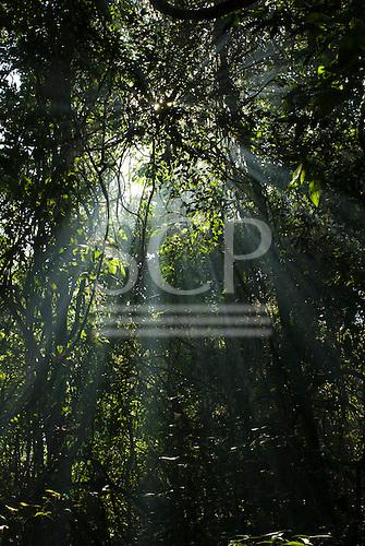 Mato Grosso State, Brazil. Aldeia Metuktire (Kayapo). Sun through the canopy.