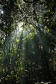 Mato Grosso State, Brazil. Aldeia Metuktire (Kayapo). Sun through the canopy.