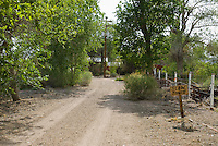 Driveway of home in Oasis Valley, Nevada, habitat of Amargosa toad, Bufo nelsoni
