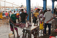 Fresh fish are butchered quickly at the Beruwala docks and fish market -near Bentota, Sri Lanka