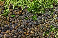 Gemeine Mosaikschichtpilz, Mosaik-Schichtpilz, Xylobolus frustulatus, Xylobolus frustulosus, Xerocarpus frustulosus, ceramic fungus, ceramic parchment