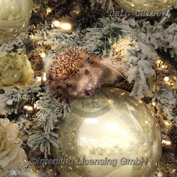 CHIARA,CHRISTMAS ANIMALS, WEIHNACHTEN TIERE, NAVIDAD ANIMALES, paintings+++++,USLGCHI567,#XA# ,funny ,funny