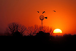 Sandhill Cranes flying over a windmill at sunset near the Platte River, Nebraska.