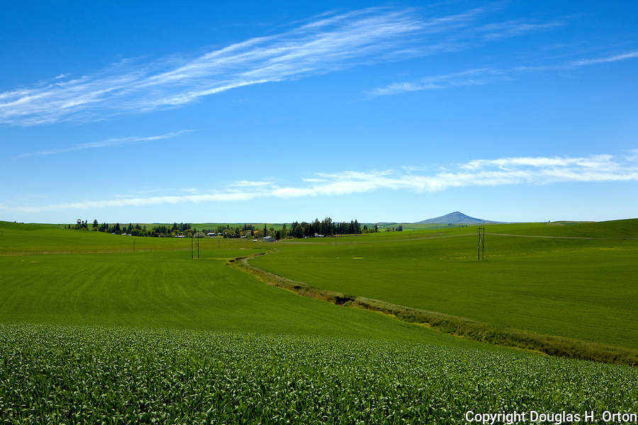 The historic town of Farmington and Steptoe Butte seen from Pigeon Hollow Road, Palouse region, Washington.  Winter wheat.