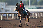 SHA TIN,HONG KONG-DECEMBER 09: Benzini,trained by Adrian Bull,exercises in preparation for the Hong Kong Vase at Sha Tin Racecourse on December 9,2016 in Sha Tin,New Territories,Hong Kong (Photo by Kaz Ishida/Eclipse Sportswire/Getty Images)
