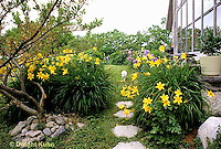 HS47-010x  English Cottage Garden - yellow day lilies, bearded iris - Hemerocallis spp, Iris spp.