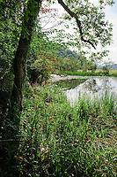 Wildlife pond, Llandeilo, Wales.....Copyright..John Eveson, Dinkling Green Farm, Whitewell, Clitheroe, Lancashire. BB7 3BN.01995 61280. 07973 482705.j.r.eveson@btinternet.com.www.johneveson.com
