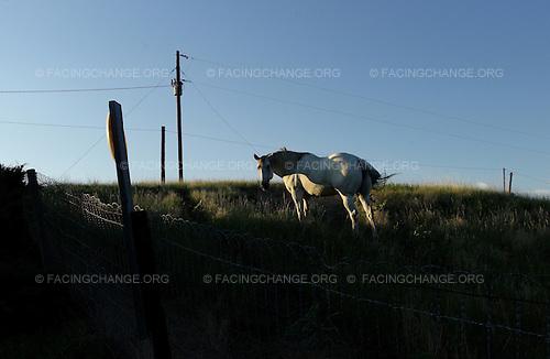 Hay Springs, Nebraska<br /> July 27, 2011<br /> <br /> A horse on a large cattle farm in the high plains of remote Western Nebraska.