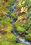 Moss along a rivulet, Denali National Park, Alaska, USA