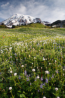 Wildflower meadow below Mount Rainier, Edith Creek Basin, Mount Rainier National Park, Washington, USA