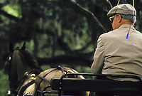 Driver holds whip and sits in buggy with horse at rest. Shot from behind driver. horse, horses, equine, animals. #564 Driver Back.
