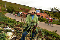 BOYACA - COLOMBIA: 08-09-2016. Una campesina recolectando cebolla es vista al paso del lote de ciclistas durante la segunda etapa de la 38 versión de la vuelta Ciclista a Boyaca 2016 que se corre entre  Pesca y Aquitania y Sogamoso. La prueba se corre entre el  7 y el 11 septiembre de 2016./ An onion farmer is seen at the pass of the cyclists' peloton during the second stage of the Vuelta a Boyaca 2016 that took place between villages of Pesca and Aquitania. The race is held between 7 and 11 of September of 2016 . Photo:  VizzorImage/ José Miguel Palencia / Liga Ciclismo de Boyaca