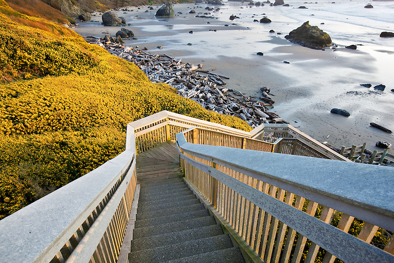 Bandon Beach with blooming gorse and stairway to beach. Oregon