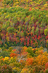 Chequamegon National Forest, WI<br /> Hardwood forest canopy in fall color - view from St. Peter's Dome at 1600 ft, the summit of Chequamegon National Forest