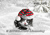 Marek, CHRISTMAS ANIMALS, WEIHNACHTEN TIERE, NAVIDAD ANIMALES, photos+++++,PLMP6982,#XA# cat  santas cap,