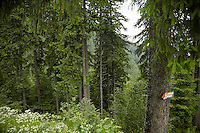 FOREST_LOCATION_90113