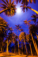 Full moon behind clouds as seen through the palm trees at Pua'ena Point, North Shore, Oahu