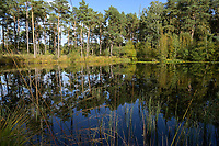 GERMANY, lower saxonia, heath moor and forest / DEUTSCHLAND, Niedersachsen, Lüneburger Heide, Wald und Moor, Ottermoor