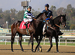 Kristo with Rafael Bejarano aboard in the post parade for the Grade III Sham Stakes at Santa Anita Park in Arcadia, California on January 11,2014. (Zoe Metz/ Eclipse Sportswire)