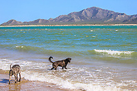 Two stray dogs bathe in the water on the beach in the estuary las jaibas located on the tip of the Kino peninsula in Bahia de Kino, Sonora Mexico. (Photo: Luis Gutierrez / NortePhoto.com) ..<br /> Landscape, sea, beach, tourist destination, travel, Gulf of California, northwest, calm, horizon. The Sea of Cortes or Red Sea that is located between the Baja California peninsula. tourist destination, mainland.<br /> Dos  perro callejeros se baña en el agua de la playa en el estero las jaibas ubicado en la punta peninsula Kino en bahia de Kino, Sonora Mexico. (Photo: Luis Gutierrez / NortePhoto.com)..<br /> Paisaje, mar, playa, destino turistico, viaje, Golfo de California, northwest, calma, horizonte. El Mar de Cortes o mar Bermejo que se encuentra entre la península de Baja California. destino turístico, tierra firme.