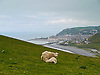 Just off the Ceredigion Coastal Path this mother sheep was feeding her lamb with the spectacular view of Aberystwyth in the background.<br /> <br /> Stock Photo by Paddy Bergin