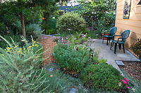 Garden rooms and cement pation in small space drought tolerant backyard garden, Richmond California