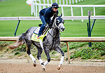 LOUISVILLE, KY - MAY 03: Destin, trained by Todd Pletcher and owned by Twin Creeks Racing Stables, LLC, exercises and prepares during morning workouts for the Kentucky Derby and Kentucky Oaks at Churchill Downs on May 3, 2016 in Louisville, Kentucky. (Photo by John Voorhees/Eclipse Sportswire/Getty Images)