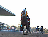 My Miss Aurelia storms to victory in the Frizette Stakes at Belmont Park on 10/8/11.