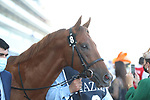 March 27, 2021: SPACE BLUES (IRE) #8 in the post parade for the Al Quoz sprint on Dubai World Cup Day, Meydan Racecourse, Dubai, UAE. Shamela Hanley/Eclipse Sportswire/CSM