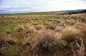 Rio Grande do Sul State, Brazil. Pampas grass growing; fields.