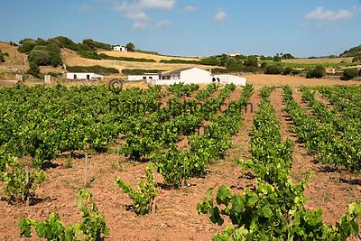 Spain, Menorca, bei Es Mercadal: Ferrer de Muntpalau vineyard | Spanien, Menorca, bei Es Mercadal: Weingut Ferrer de Muntpalau