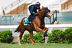 SHA TIN,HONG KONG-MAY 05: Stormy Antarctic ,trained by Ed Walker,with boarding the jockey,Karis Teetan,prepares for the Champions Mile at Sha Tin Racecourse on May 5,2017 in Sha Tin,New Territories,Hong Kong (Photo by Kaz Ishida/Eclipse Sportswire/Getty Images)