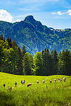 Deutschland, Bayern, Chiemgau, bei Schleching: Wandern auf der Petereralm, im Hintergrund die Chiemgauer Alpen mit Rudersburg | Germany, Bavaria, Chiemgau, near Schleching: hiking at Peterer Alm, at background Chiemgau Alps with Rudersburg mountain