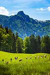 Deutschland, Bayern, Chiemgau, bei Schleching: Wandern auf der Petereralm, im Hintergrund die Chiemgauer Alpen mit Rudersburg | Germany, Bavaria, Chiemgau, near Schleching: hiking at Peterer Alm, at background Chiemgau Alps with Rudersburg mountain