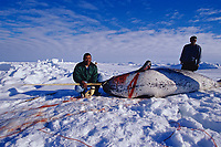Inuit hunters with narwhal, Monodon monoceros, showing spiraled tusk, Baffin Island, Nunavut, Canadian Arctic