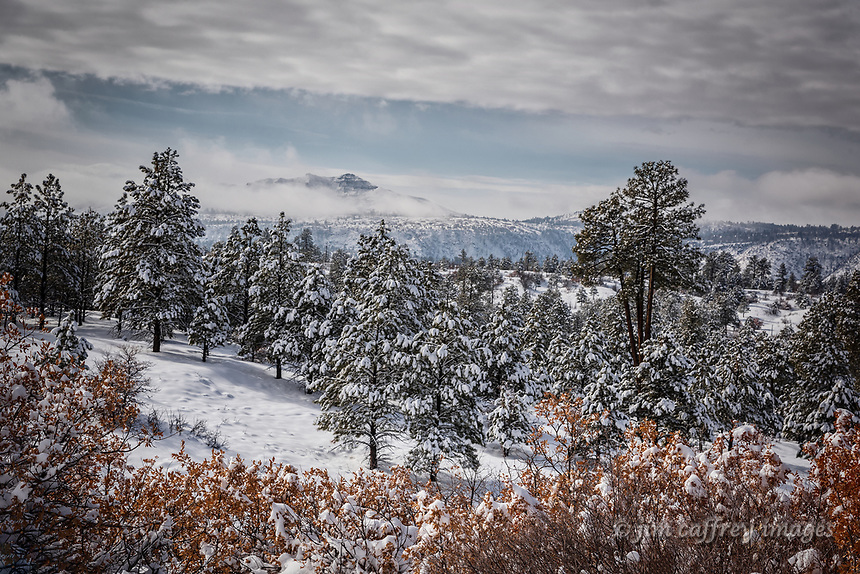 Snow covered pine trees on the edge of Frijoles Canyon with The Dome on the horizon.
