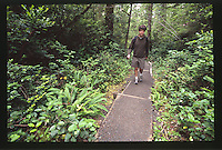 Hiker on Hall of Mosses Trail at the Hoh Rain Forest, Olympic National Park, Washington, US