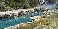 Warbrick Terrace, Waimangu Volcanic Valley, Central Plateau, Rotorua Region, North Island, New Zealand, NZ
