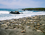 Elephant seals and Piedras Blancas Lighthouse, San Simeon, on the Scenic Highway 1 Coast, California