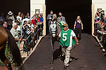 January 16, 2016:  Lori's Store in the walking ring before winning the Sunshine Millions Filly and Mare Turf Stakes at Gulfstream Park, Hallandale Beach (FL). Arron Haggart/ESW/CSM