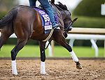Jesus' Team, trained by Jose Francisco D'Angelo, exercises in preparation for the Breeders' Cup Dirt Mile at Keeneland 1030.20.