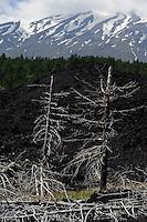 Verbrannte Bäume am Etna, Sizilien, Italien , UNESCO-Weltnaturerbe