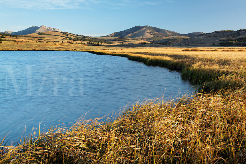 Swan Lake surrounded by yellow meadow in autumn, Yellowstone National Park, Wyoming, USA